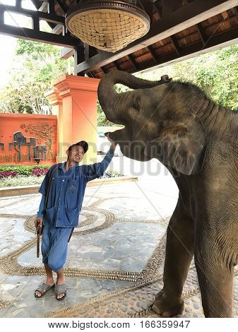CHIANG RAI THAILAND - JANUARY 8 2017: A Mahout and his elephant. At the Anantara Golden Triangle Elephant Camp a charity designed to help elephants and their handlers.