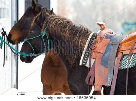 Side profile of a saddled black horse hitched to a trailer with another blurred horse in the background