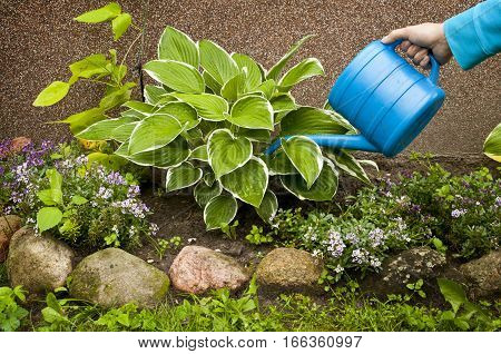 Gardening works - woman hand with water can watering plants