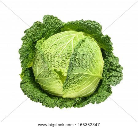 Savoy cabbage isolated on white background. close up without shadow