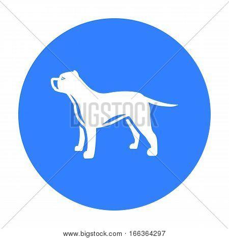 Pitbull vector illustration icon in blue design