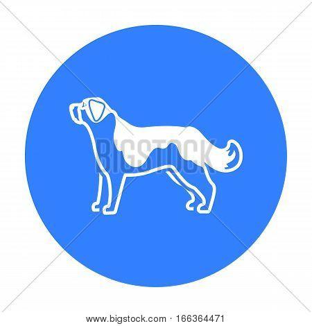 St. Bernard dog vector illustration icon in blue design