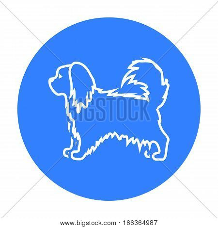 Pekingese vector illustration icon in blue design