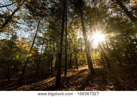 Early morning Sunbeams shining through forest trees in autumn at Troodos mountains Cyprus