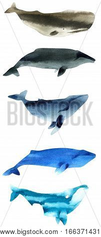 Watercolor sketch of whales. Illustration isolated on white background