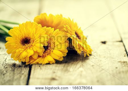 Beautiful Fresh Spring Yellow Bunch of Gerbers on Old Vintage Wooden Table. Spring Concept. Closeup.