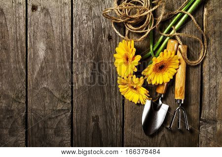 Gardening tools flowers rope brushes and gardening gloves on vintage wooden table. Spring summer or garden concept background with free text space.