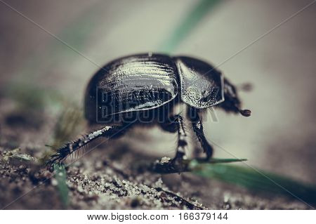 bug in the forest  is a species of shield bug in the family Pentatomidae