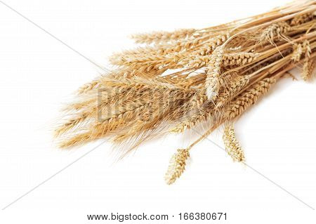 bunch of ears of wheat isolated on white background