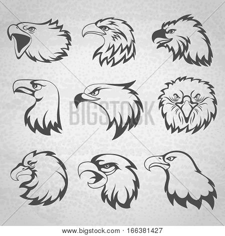Hawk, falcon or eagle head mascot set vector illustration isolated on white background. Animal bird mascot sketch tattoo illustration