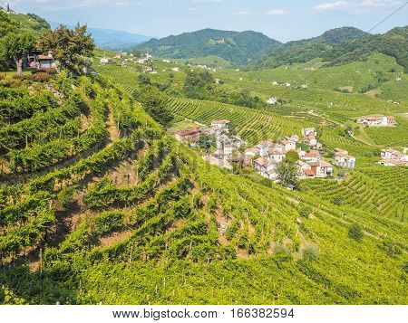 Sunny view of the vineyards on Valdobbiadene hills harvest of grapes for Prosecco sparkling wine