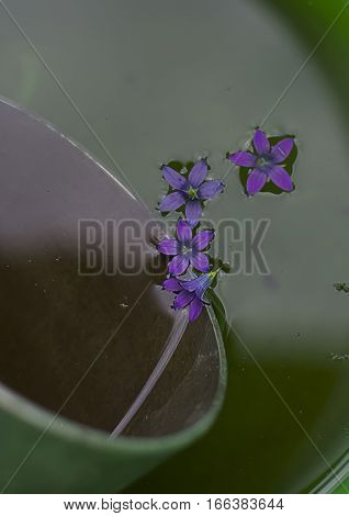 Flowers bluebell which fell into the water near the ladle lowered into the bucket