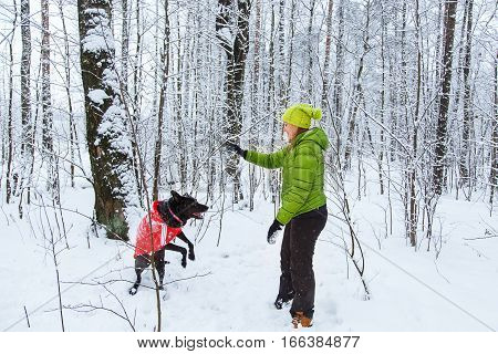 Active beautiful girl walk the dog in the winter forest.