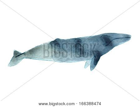 Watercolor Sketch Of Gray Whale. Illustration Isolated On White Background
