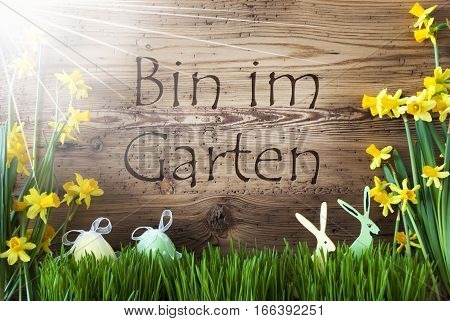 Wooden Background With German Text Bin Im Garten Means I Am In The Garden. Easter Decoration Like Easter Eggs And Easter Bunny. Sunny Yellow Spring Flower Narcisssus With Gras.
