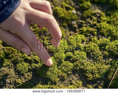 A hand touching beautiful and bright green moss