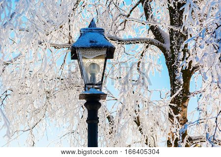 Snowy Scene Of A Street Lamp And Trees