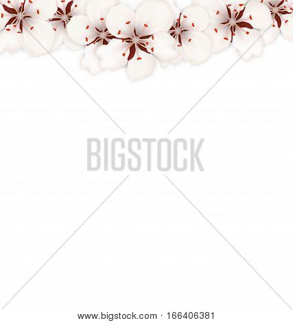 Illustration Blooming Sakura Flowers Blossom Isolated on White Background - Vector