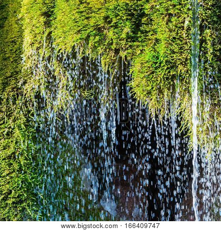 Running Water From A Moss Covered Rock