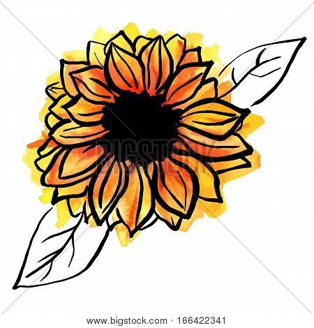 A freehand vector and watercolor drawing of a yellow sunflower