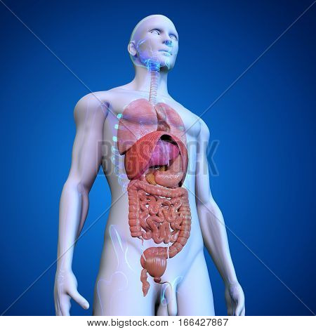 The human body is the entire structure of a human being and comprises a head, neck, trunk (which includes the thorax and abdomen), arms and hands, legs and feet