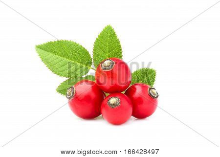 Rose hip with leaves isolated on white background.