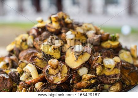 Many fresh mushrooms in nature in a neutral blurred background