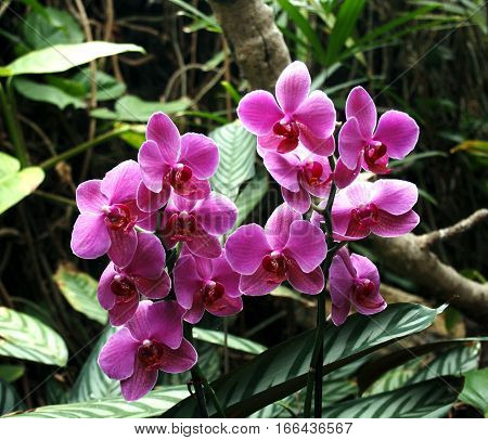 orchid flower (Orchidaceae scientific name) are a family of monocots distinguished by the complexity of their flowers and their ecological interactions with pollinators and fungi with mycorrhizal.