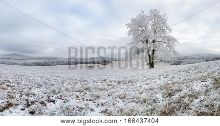 Winter with alone frozen tree panorama nature landscape