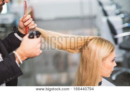 Professional stylist is working with a client. He is holding long blond straight hair and scissors
