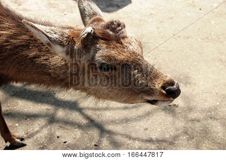 a juvenile adorable deer in a zoo