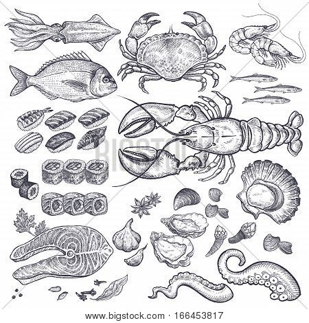 Seafood fish shrimp crab lobster octopus mollusks Japanese sushi isolated graphic black ink on a white background a set. Vintage engraving illustration art. Vector. Food and restaurant design.