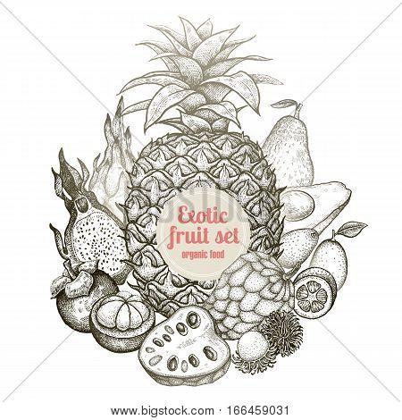 Composition exotic fruit kumquat pineapple dragonfruit rambutan mangosteen cherimoya avocado. Black white illustration. Vintage vector engraving hand drawing organic food on white background