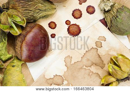 A background with a fresh raw chestnut and dried plants and a place for your text.