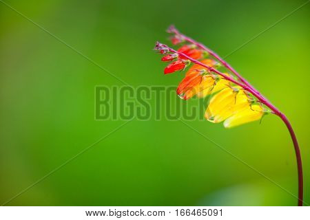 Beautiful Red Flower On Background Image