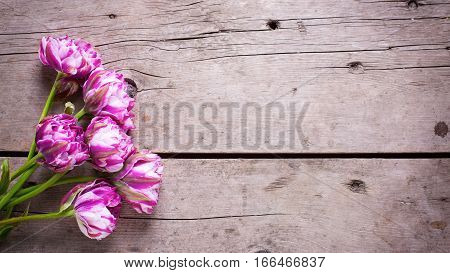 Violet tulips flowers on aged wooden background. Selective focus. Place for text. Flat lay still life. Toned image.