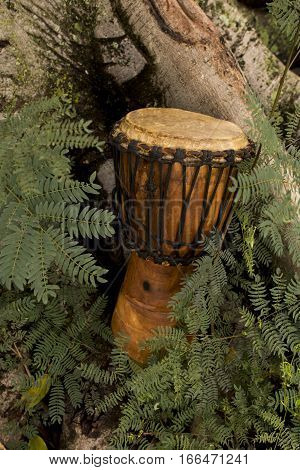 Djembe drum in a nature setting leaning against roots of a tree with fern leaves in the foreground
