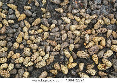 Fallen cones of pine bark brown background