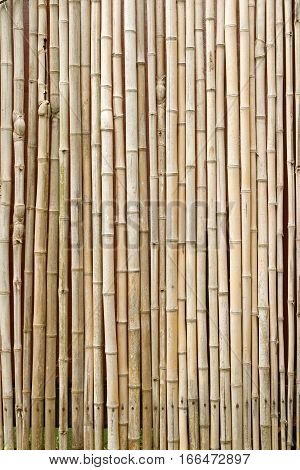 Brown bamboo background texture in a vertical format with copy space