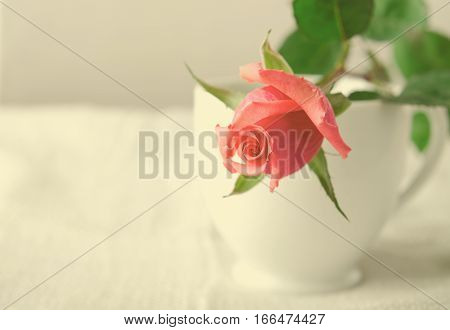 Pink Roses, Flowers on White Background in cup, card for Valentines day, copy space, Pastel Color, toned, horizontal