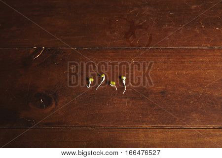 Top view of four small soy bean sprouts isolated on textured rustic wooden table in center