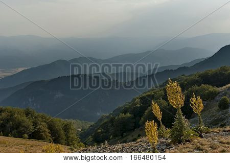 Mountain landscape at Central Balkan mountain with mullein or Verbascum flower, Beklemeto or Trojan pass, Stara Planiana, Bulgaria