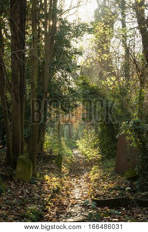Cemetery: Autumnal Path