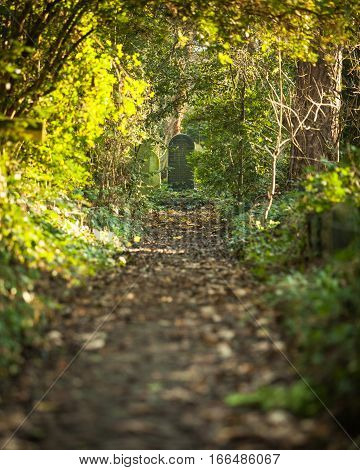 Cemetery: Autumnal Path Leading To Grave Stone.