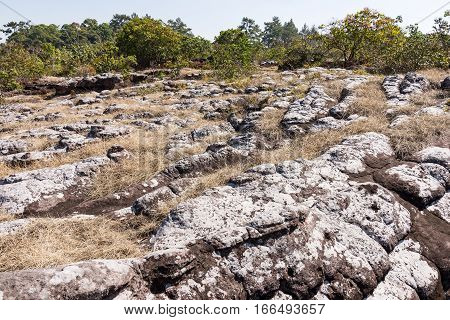 Sandstone node on the dry grass field in of the national parkThailand.