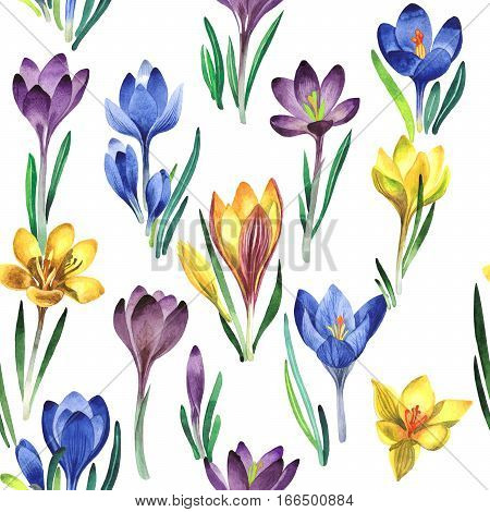 Wildflower crocuses flower pattern in a watercolor style isolated. Full name of the plant: crocuses, saffron. Aquarelle wild flower for background, texture, wrapper pattern, frame or border.