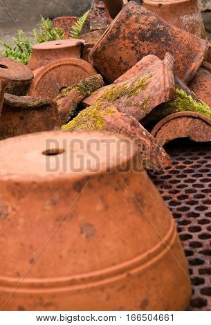 Terracotta plant pots and pieces in garden.