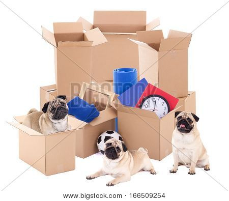 Moving Day Concept - Brown Cardboard Boxes And Cute Dogs Isolated On White