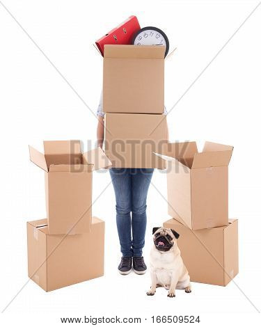 Moving Day Concept - Woman Holding Brown Cardboard Boxes And Dog Isolated On White