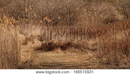 Dry Rural